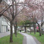 sakura2010-002.jpg