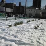 2014-02-16雪